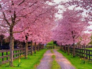 spring+driveway
